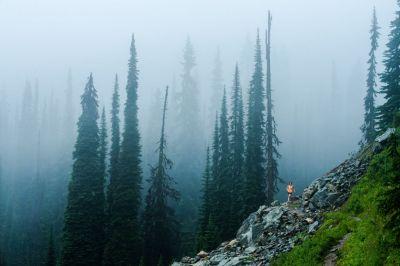 Runner: Miranda Murphy Location: Mt Revelstoke National Park